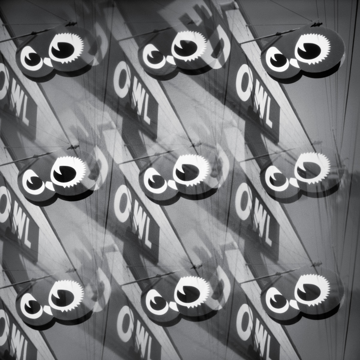 Red Owls - pinhole camera photograph